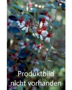 Kräutertee Holunderblüten, 80g